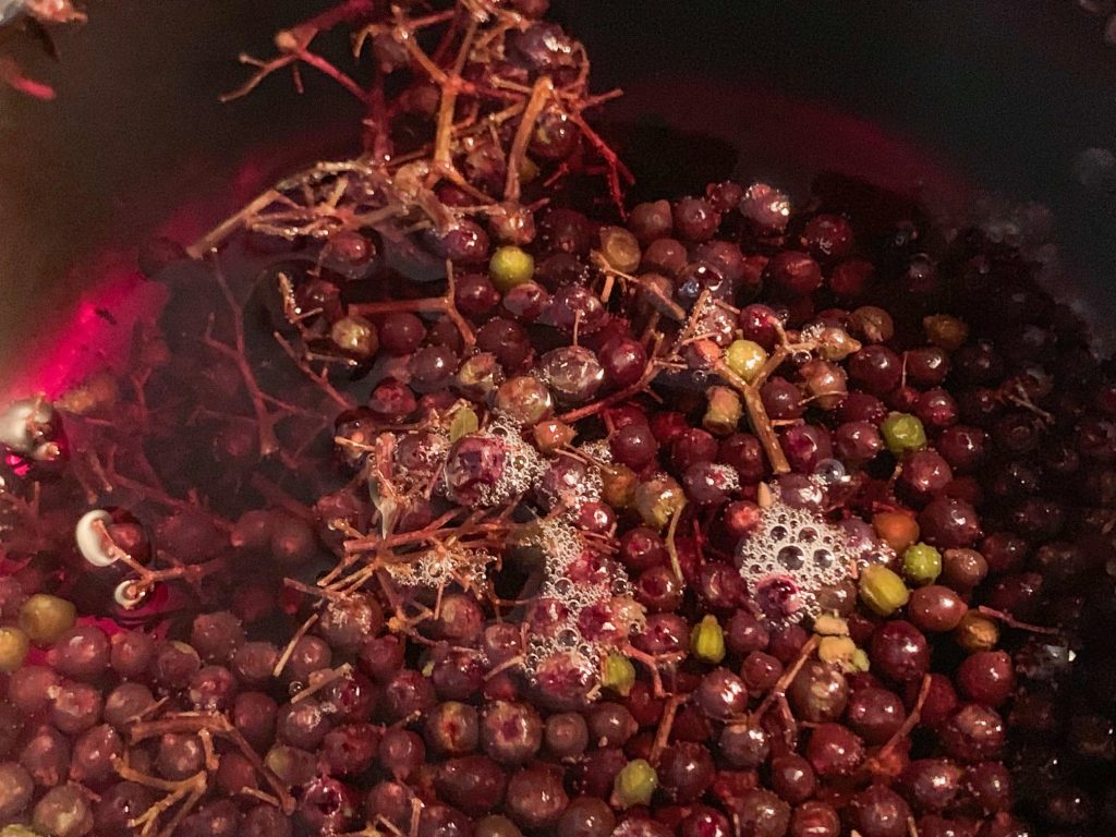 close up view on what elderberries look like